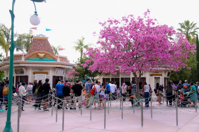 Disneyland 101