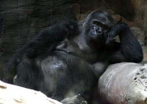 The World's Best Zoo – Omaha's Henry Doorly Zoo & Aquarium