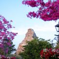 Spring time at Disneyland the Matterhorn