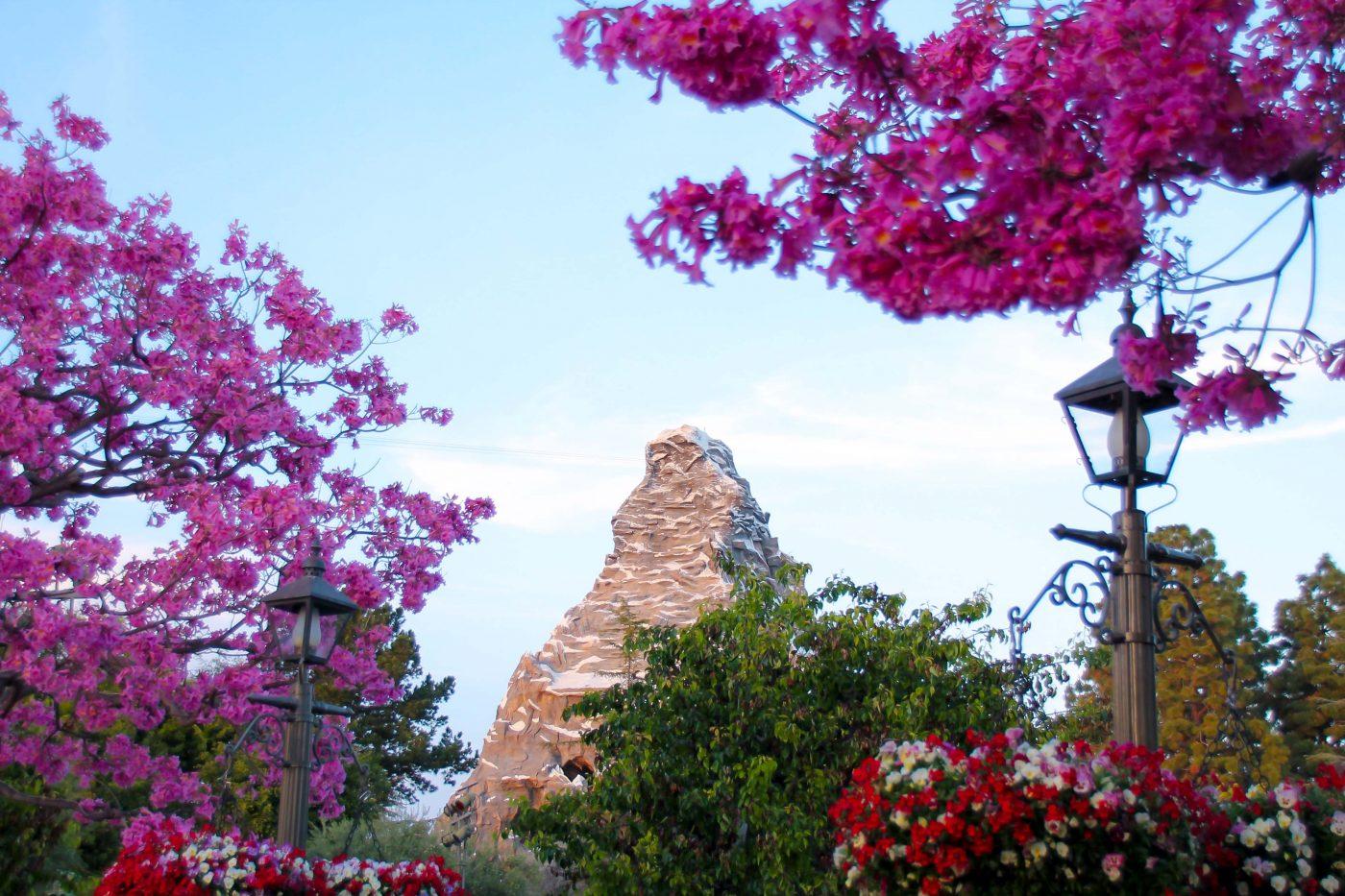 Springtime at Disneyland - This Crazy Adventure Called Life