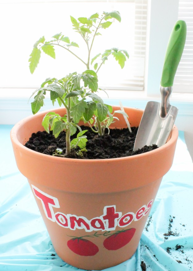 Plant veggies and herbs in pots and you can have a garden in your apartment
