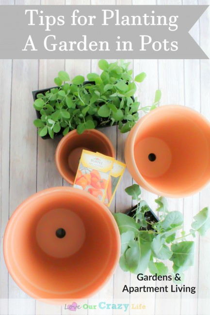 Tips for Gardening Using Pots
