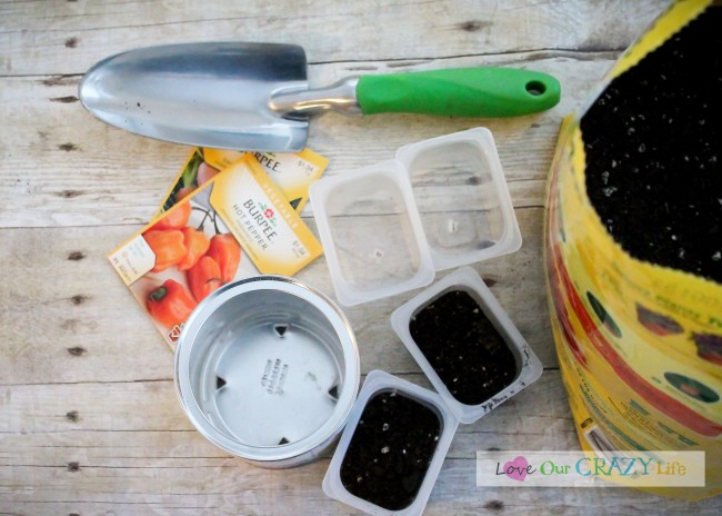 Old baby food containers for starting seeds