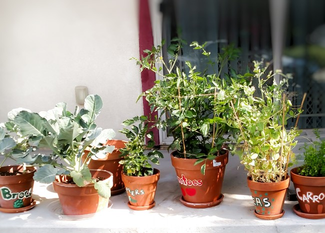 Tips for growing produce in pots while living in an apartment