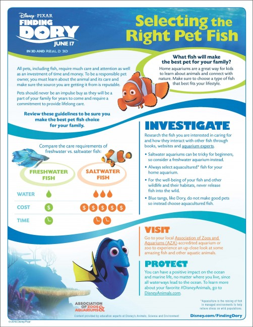 Finding Dory Pet Fish info