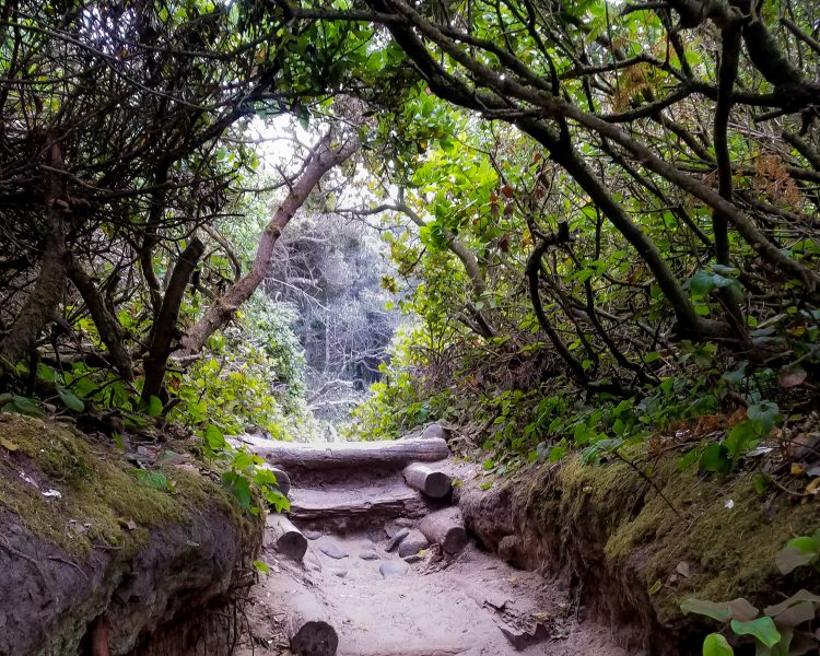 The hobbit trail near Florence Oregon