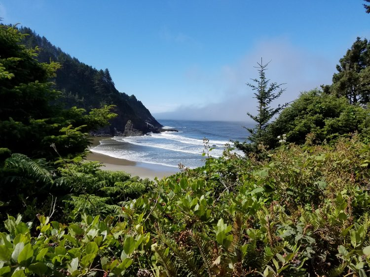 Trail to Heceta Head Lighthouse